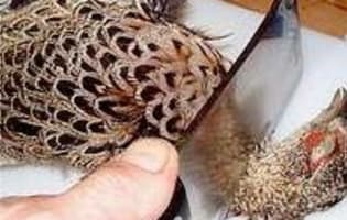 Plumer une poule faisane par immersion - Etape 3