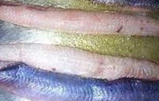 Anguilles au vert - Etape 1