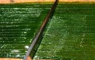 Vitrail de poireaux - Etape 4