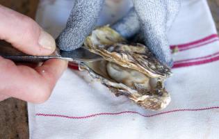 Ouvrir les huîtres facilement - Etape 6