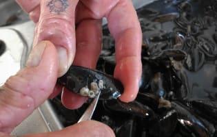 Préparer les moules - Etape 4