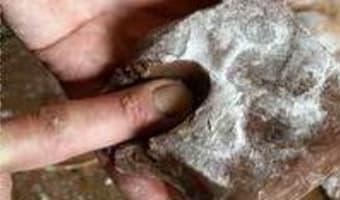 Feuilletage au chocolat : la détrempe - Etape 7