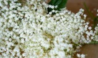 Sirop de fleurs de sureau - Etape 1