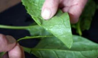 Préparer les épinards - Etape 2