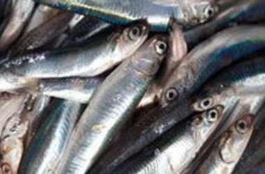 Les poissons les plus courants