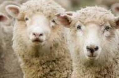 Choisir le morceau d'agneau adapté à la cuisson