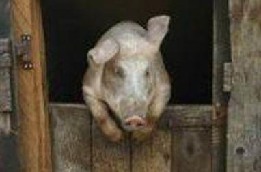 Bien choisir le morceau de porc adapté à la cuisson