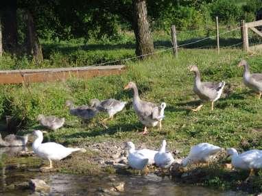 Classification des volailles, critères de qualité, élevages et labels.