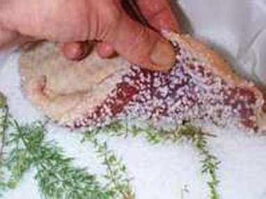 Magret de canard séché au sel