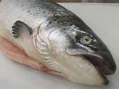 Techniques de préparation des poissons