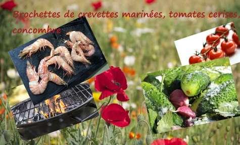 Brochettes aux crevettes, marinées, au concombre et tomates