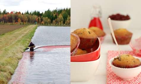 Muffins aux canneberges et pépites de chocolat