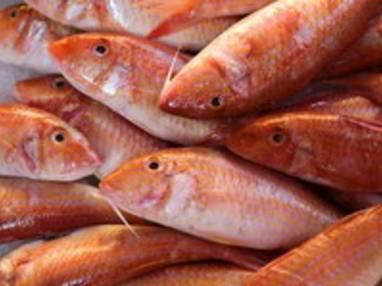 Les poissons les plus courants en cuisine for Nom poisson rouge