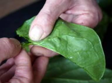 Préparer les épinards - Etape 1