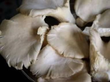 pleurotes saut 233 s recette de chignons pleurotes saut 233 s par chef simon