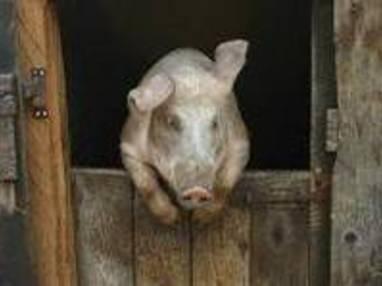 Le porc - Découpe et utilisation des morceaux
