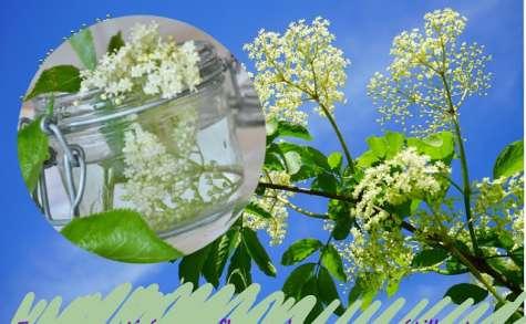Boisson rafraîchissante aux fleurs de sureau, pétillante