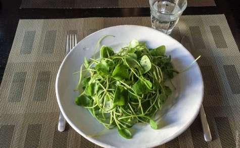 Pourpier d'hiver en salade