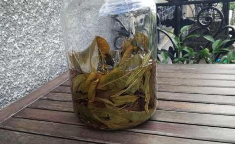 Vin de feuilles de pêcher