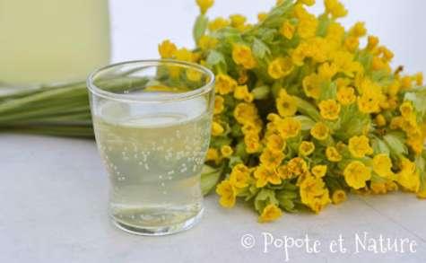 Limonade aux fleurs de coucou