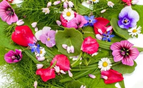 Salade sauvage aux fleurs comestibles