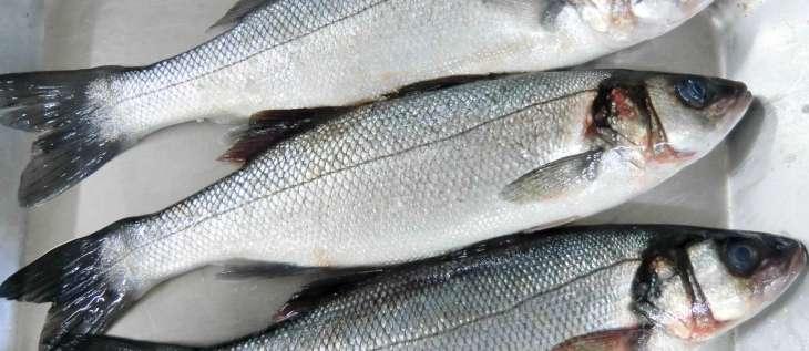 Les critères de fraîcheur du poisson