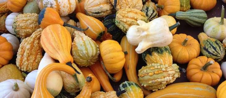 Les courges vari t s et int r t nutritionnel - Planter des graines de potiron ...
