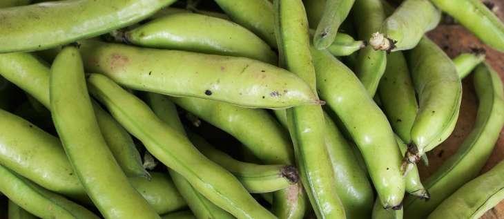 les fèves - histoire, qualités et cuisine des fèves fraîches ou sèches