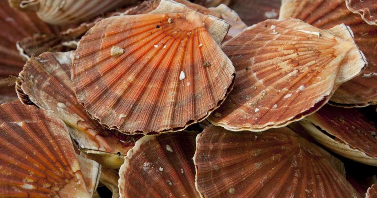 Les coquilles saint jacques bien les choisir bien les - Cuisiner le corail des coquilles saint jacques ...