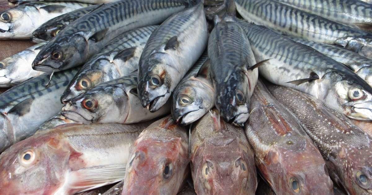 Conseils d 39 achat du poisson bien choisir le poisson en for Poisson a acheter