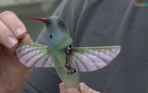 Design a Powerful Bird Wing