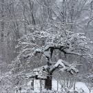 Der richtige Winterschutz für die Obstbäume