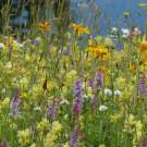 Den Naturgarten planen – Nutzung und Bepflanzung