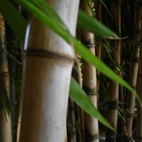 Bambus-Bodenbelag punktet mit positiver Ökobilanz & hoher Belastbarkeit!
