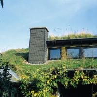 Wissenswertes zu Kosten und Aufbau einer extensiven und intensiven Dachbegrünung