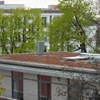 Die Top 5 der Dachbegrünung