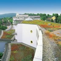 Fachgerecht das Dach begrünen lassen