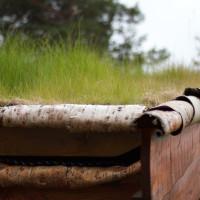 Dachbegrünung Garage als ökologischer Weg zum Geld sparen