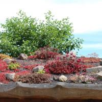 Dachbegrünung anlegen – Ein Stück Natur auf dem heimischen Dach
