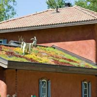 Kosten Dachbegrünung: Preise variieren je nach Bepflanzung und Hersteller