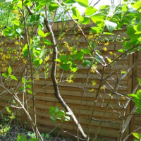 Sichtschutz im Garten – Flexibel einsetzbar und immer zuverlässig