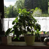 Fensterbänke aus Naturstein für Innen und Außen