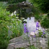 Schwimmteich richtig pflegen: Vegetation, Hygiene und Wartung spielen eine große Rolle!