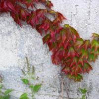 Eine Eingriffsregelung für Fassadenbegrünung wirkt sich positiv auf die Natur aus