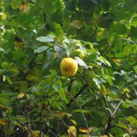 So legen Sie Ihren eigenen Obstgarten an