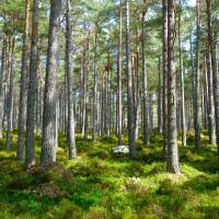 Waldschutz: Lebensraum für die Zukunft erhalten