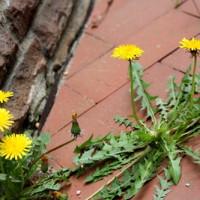 Professionell alte Terrassenfliesen entfernen