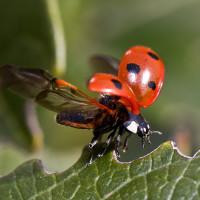 Nützling oder Schädling? So bestimmen Sie Käfer