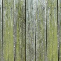 Diese Mittel wirken effektiv gegen Moos auf Ihrer Holzterrasse