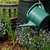 Manuelle oder automatische Bewässerung im Garten?